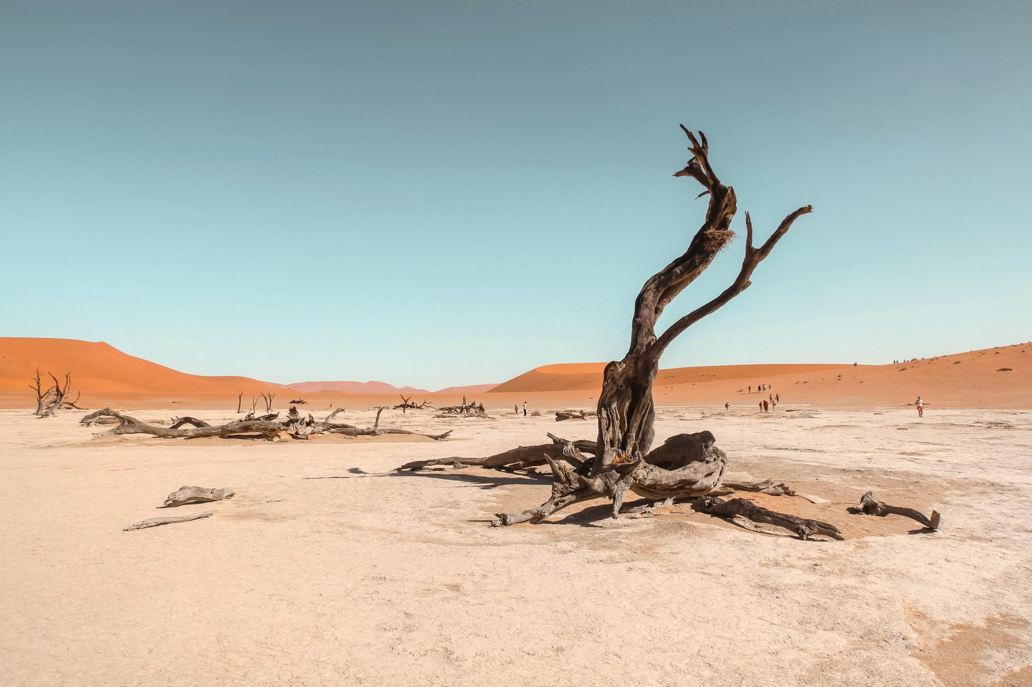 a dry, leafless tree in the desert